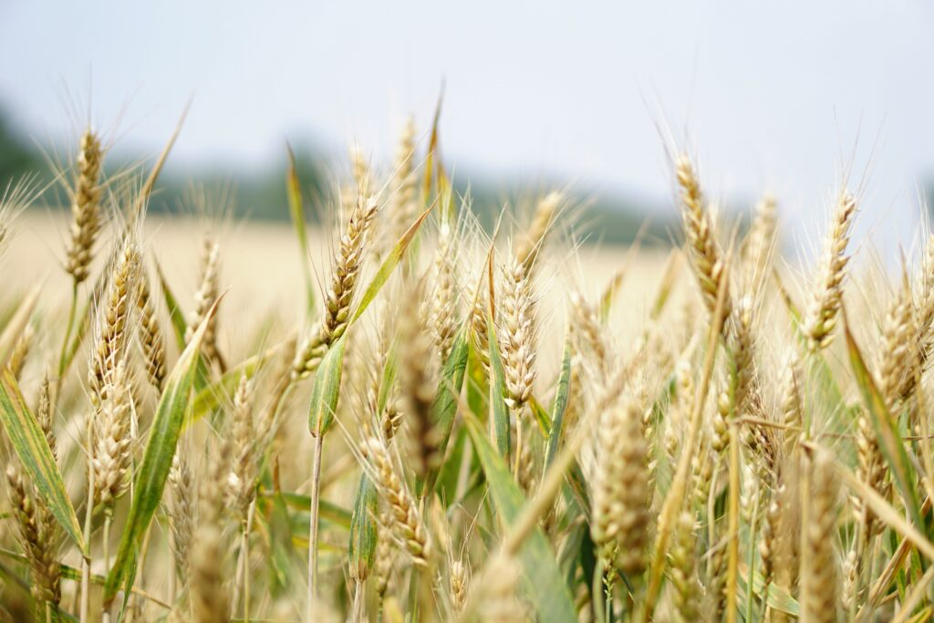 Fertilizers Europe accepts the challenge to reduce nutrient losses for resilient food system