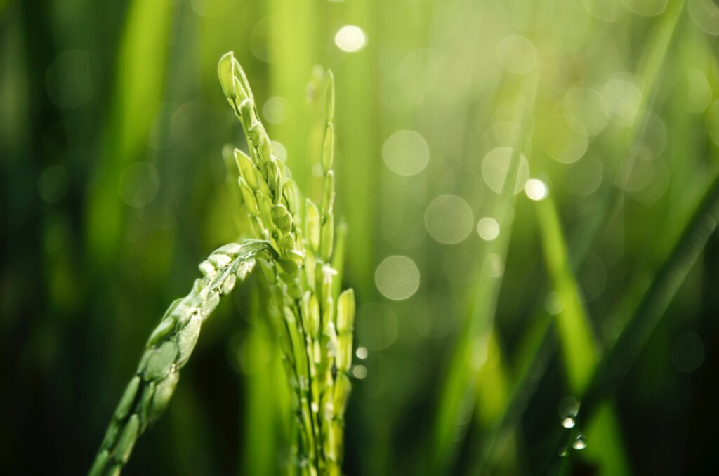 Towards circular fertilizer solutions and a more sustainable farming sector - new EU consortium just launched